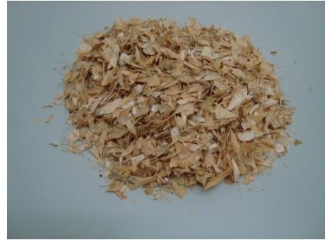 JUDÍAS VAINAS (Phaseolus vulgaris)
