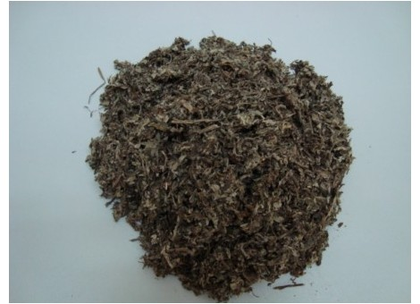 ARTEMISA (Artemisia vulgaris)