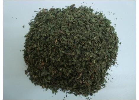 ORTIGA VERDE (Urtica dioica)